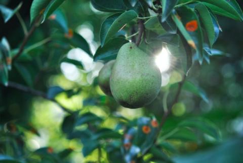Zo breng je de boel in beweging: schudden aan de appelboom